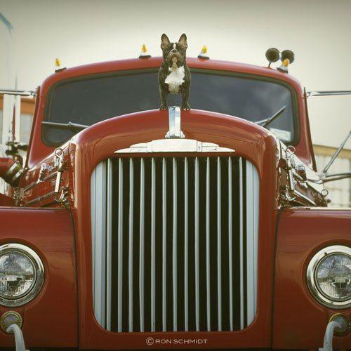 美國攝影師Ron Schmidt善於利用不同視角,記錄大家熟悉的狗狗面貌。圖;文...