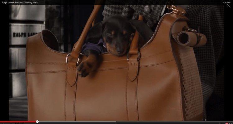 狗狗在Ralph Lauren新包款裡睡著的模樣相當可愛。圖/擷取自Ralph ...