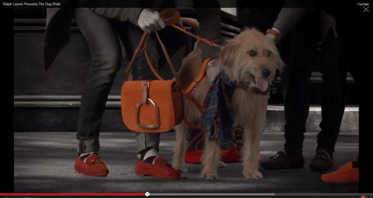 根據Ralph Lauren官網上表示,廣告裡出現的狗狗們有的已被善心民眾領養。...