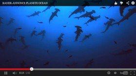愛海洋之美! OMEGA發表環保電影