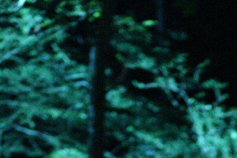 MBC TV新水木劇(週三週四播出的劇集)《夜行書生》劇組公開了一張男主角李準基的劇照。電視劇《夜行書生》圍繞吸血鬼金聖烈展開,他原是弘文館副提學,後被捲入某大事件中變成了吸血鬼書生。公開的照片中,...