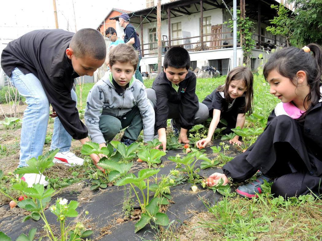 當學童大聲說出馬鈴薯長在「樹上!」時,這讓傑米迫切感到飲食教育的重要。 照片/郭...