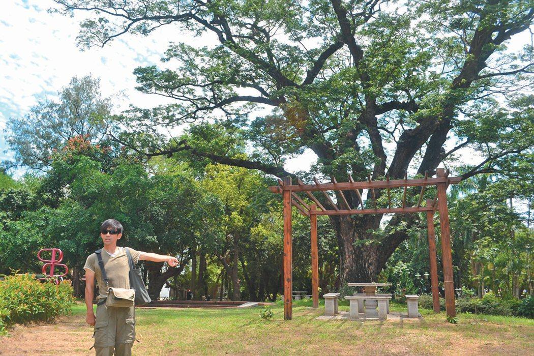 台南公園東北側百年雨豆樹圓形劇場前,設置石桌石椅,相當唐突。  記者鄭惠仁/攝影