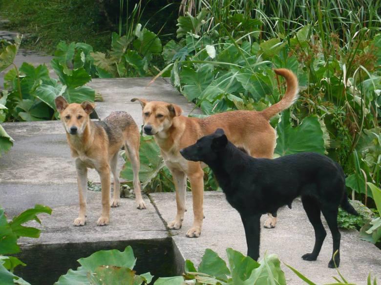 狗狗是聰明的動物,但牠們應該被好好圈養在人工環境中,而不應該出現在野地,甚至是國...
