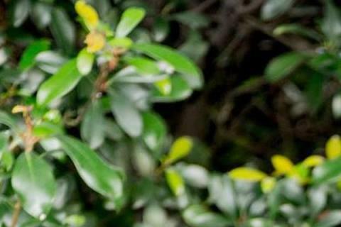 最近木村來台、周董當爸一連串粉紅泡泡的新聞,但最讓噓編感到不勝唏「噓」的新聞,就是「小白兔」楊可涵自殺未遂了,更噓的是,還爆出與張庭瑚同居!想當年(2013年7月)庭瑚底迪獻出「第一次」…個人專訪給...