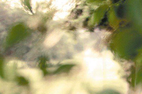歌手黃美珍與演員張瑞哲預計8月中在台補辦婚宴,婚紗照已經曝光,昔日走搖滾風格的「瞳」變身嬌俏浪漫的新娘子。兩人最近拍婚紗照,體貼的新郎特別要求將拍攝時間提早至清晨5點半,可以避開炎熱的日頭。為了拍攝...