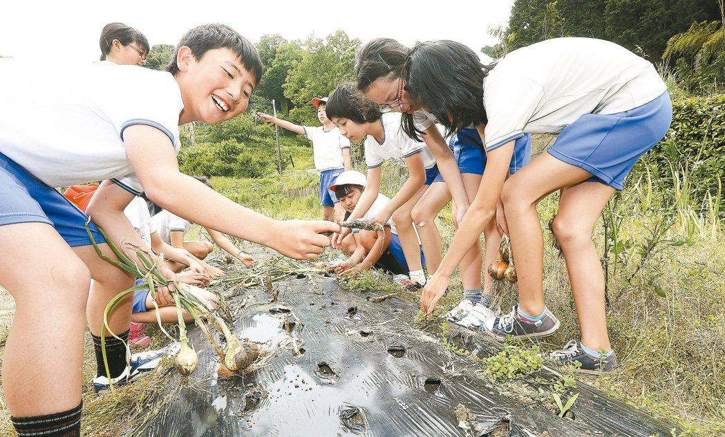 櫻野小學校學生採收在學校農園自行種植的洋蔥。 記者黃威彬/日本攝影