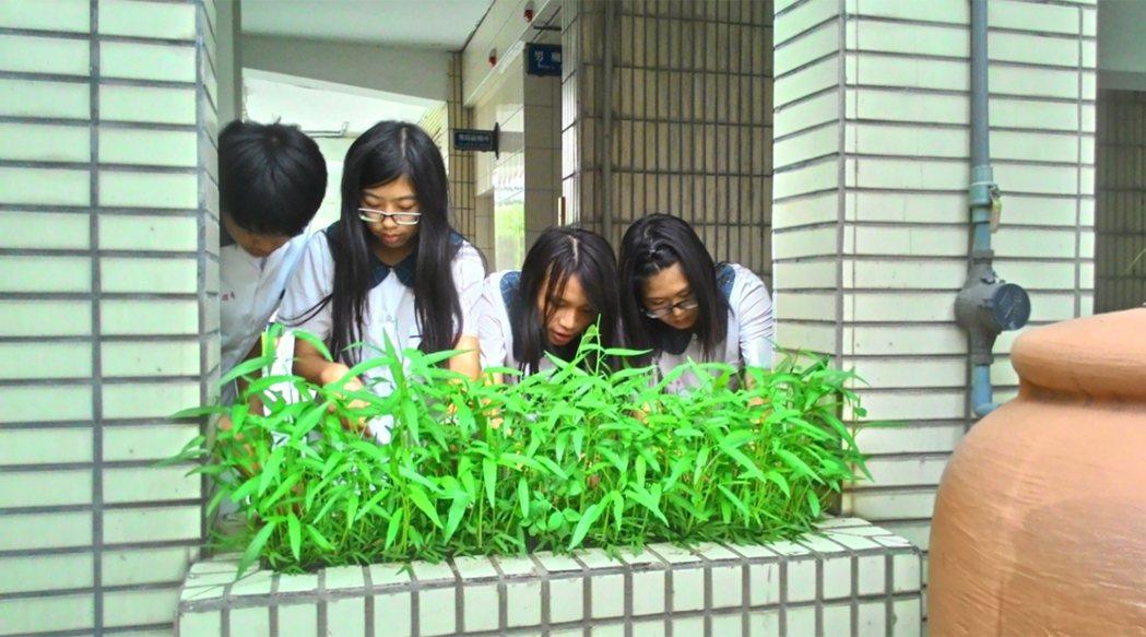 深坑國中老師林妙娟在學校實施完整食農教育,針對學生觀念、態度及行為,做施受後差異...