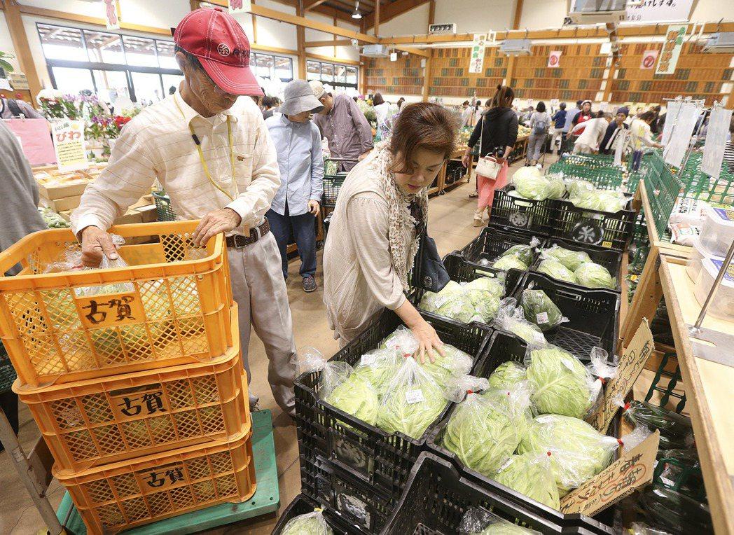 農民古賀勝俊一天可賣300顆高麗菜。 記者 黃威彬/攝影