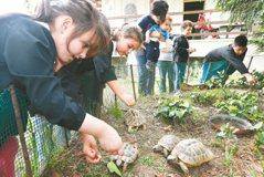 小學大計畫…食育從小入魂 理解食材並友善土地