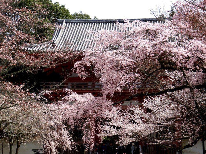 醍醐寺一景。 圖/胡川安
