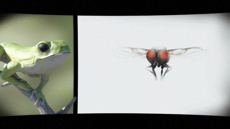 「莫氏樹蛙」為主角的兩分鐘動畫短片《 我看到,僅此一見,一幅壯麗的畫面》圖/蕭勝...