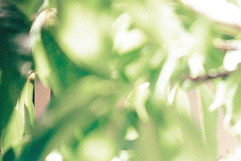 舒淇與張震在侯孝賢電影「刺客聶隱娘」中雖是青梅竹馬,但後來「不打不相識」。為了拍這場打戲,舒淇、張震壓力不小,因舒淇拿匕首、張震使長劍,張震深怕控制不好而傷人。舒淇透露,張震曾不小心在她的脖子畫一刀...