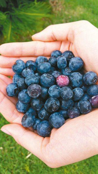 藍莓 圖/本報資料照片