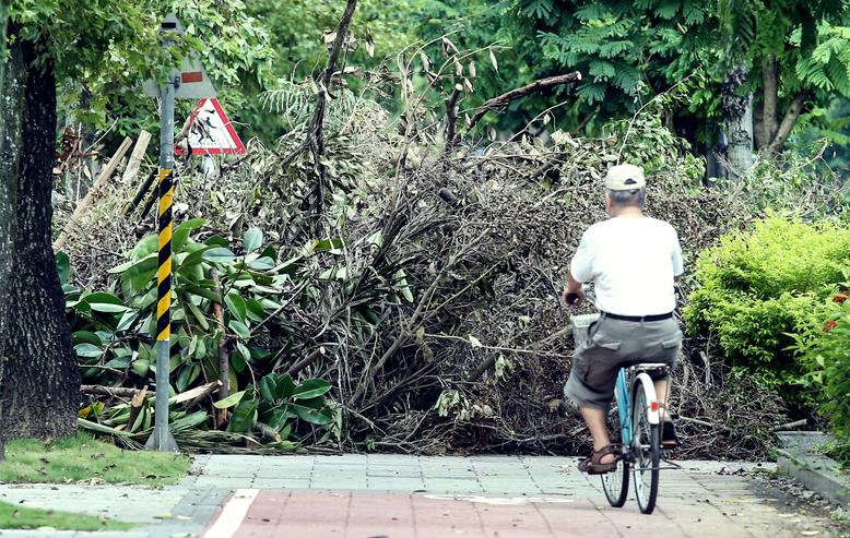 蘇迪勒颱風造成嚴重災情,台北市路樹被吹倒數量之多前所未見。 圖/報系資料圖片