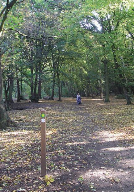 倫敦的夏托河濱步道,除沿途串連鄰里公園外,更穿越森林。 圖擷自 London B...