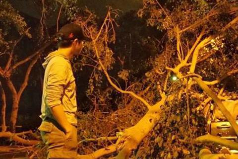 颱風肆虐,超強陣風讓台北市容滿目瘡痍,昨日王力宏在臉書上車輛po出一台車子被壓在樹下的照片,直言「蘇迪勒欺負了台北」,因倒下來的樹十分巨大,比站在一邊的王力宏還大上幾倍,網友們紛紛表示要力宏注意自己...
