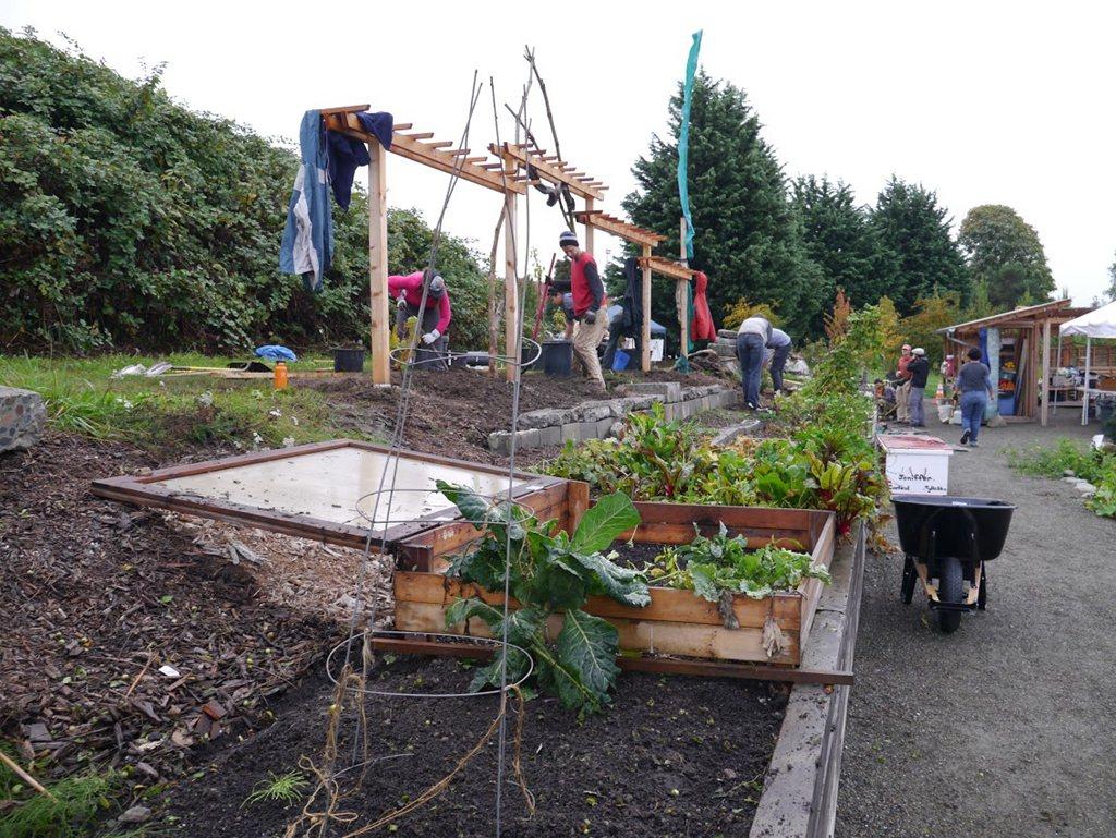 西雅圖食物森林開放人們自由種菜、採收,共享食物資源。 圖/梧桐環境整合基金會提供