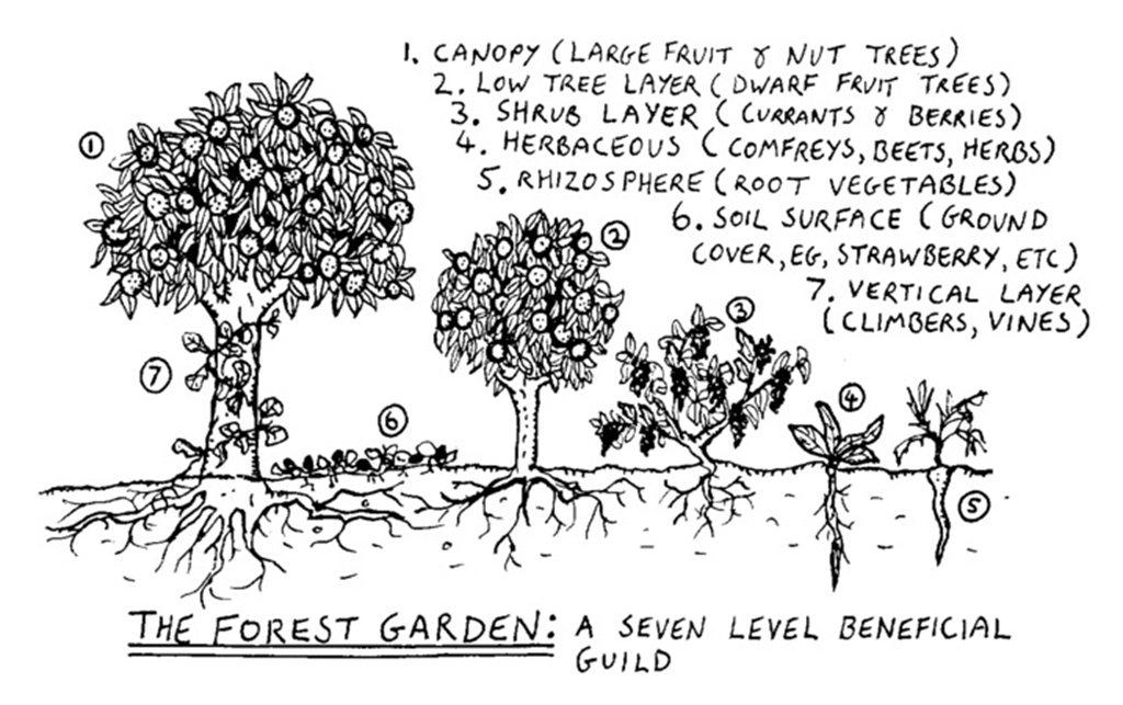 必肯食物森林仿照自然森林,利用植物原有的高低落差,在小小一塊地上,種出人工植物群...