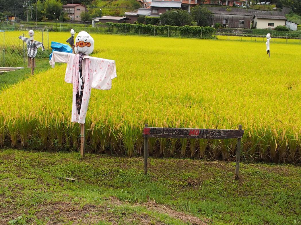 樫田小學的學生擁有負責耕種的稻田,農作物還會變成每天的營養午餐。林秀姿/攝影