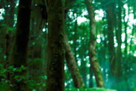 許瑋甯拍恐怖片「紅衣小女孩」,為尋找戲裡失蹤男友與搜救隊上山卻不幸落單,這場森林戲拍得她每天情緒ㄍ一ㄥ在崩潰邊緣,還經常摔倒而全身瘀青,苦不堪言。「紅衣小女孩」改編自1998年轟動全台靈異事件,為拍...