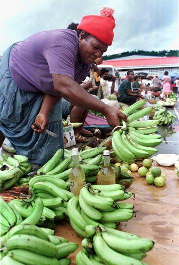 最早,向風群島是不種香蕉的,但在殖民母國——英國——的授意下,香蕉產業才開始在加...