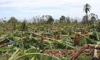 2010年Thomas颶風侵襲各國,向風群島的香蕉產業遭受毀滅性重創。 圖/Fa...