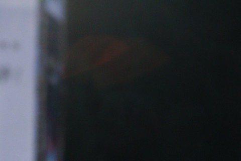 入圍迷你劇集/視電影女配角獎的李維維(圖)與藝人溫昇豪一起走星光大道。