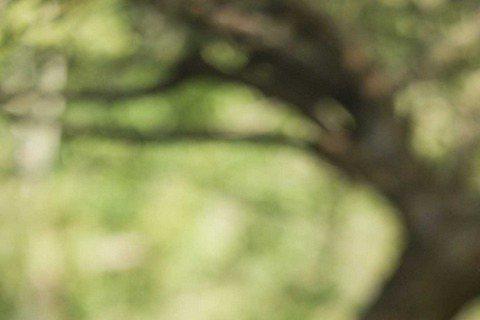 藝人安鈞璨今年6月因肝癌病逝,遺作大愛戲「綠野心蹤」近期將上檔,戲中飾演他妻子的賴薇如,看到預告片,回憶拍戲點滴,瞬間湧上心頭,數度情緒激動,安鈞璨無法為戲宣傳,她說:「我只當他是去大陸工作,所以這...