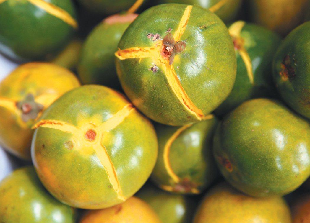 蛋黃果。 特派記者陳柏亨/秘魯攝影