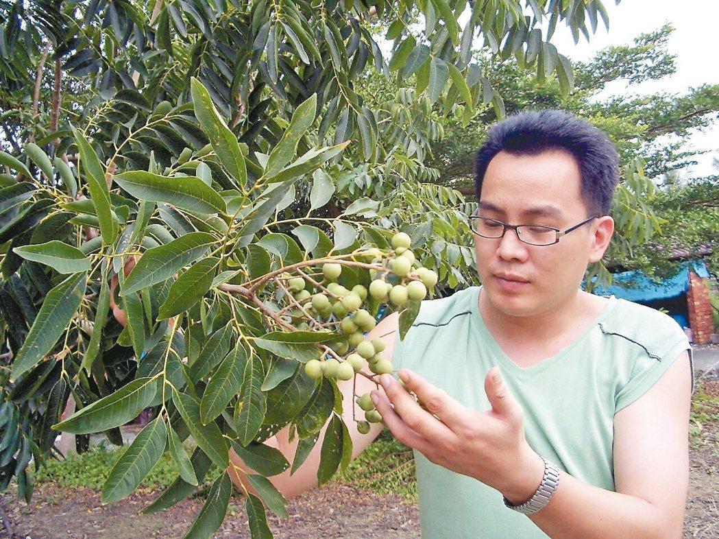 棄竹科工程師高薪,王瑞閔返鄉投入無患子產業闖出一片天。 圖/王瑞閔提供