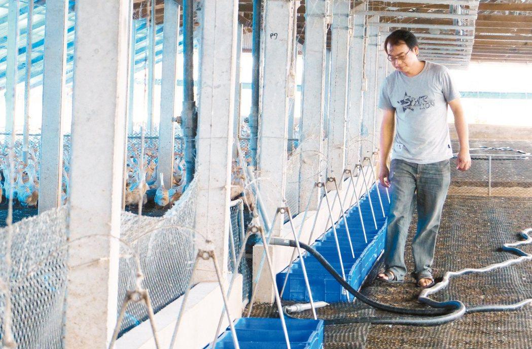 吳鴻基設計改良鴨舍,以高床式懸吊蛋箱設備讓鴨子的糞便直接落入地面,不會汙染鴨蛋。...
