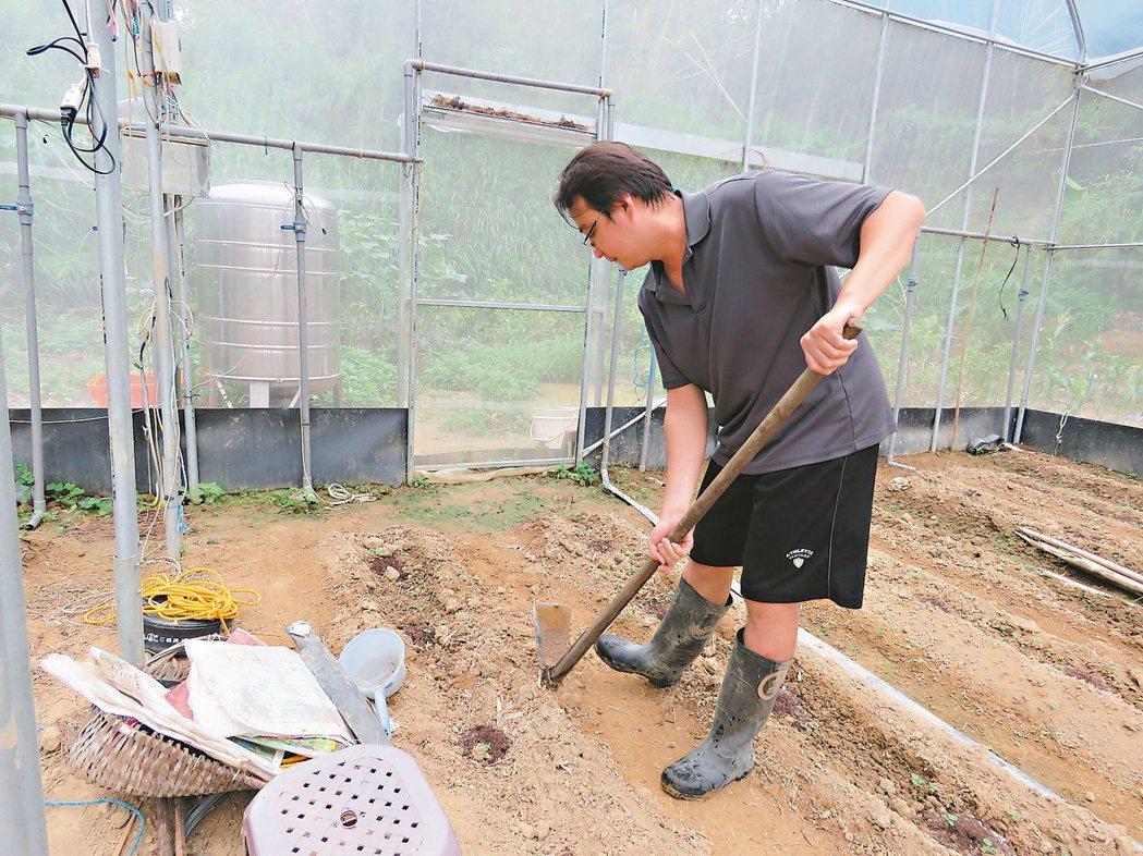 傅兆銘去年卸下科技新貴身分,返回苗栗縣西湖鄉龍洞村老家種番茄,當快樂農夫。 記者...