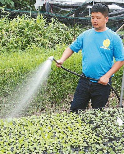長濱鄉農會理事陳晟揚返鄉務農十年,堅持走有機農業路。  記者謝龍田/攝影