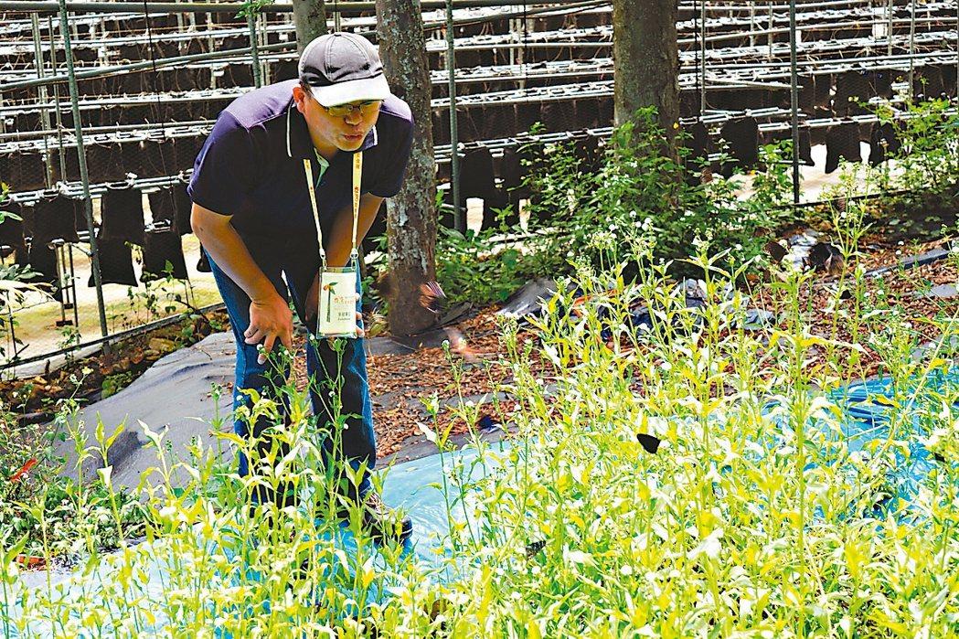 南投縣埔里鎮青年農民陳新豪提倡「農業生態復育」工作,讓蝴蝶等動物自然出現在農田裡...