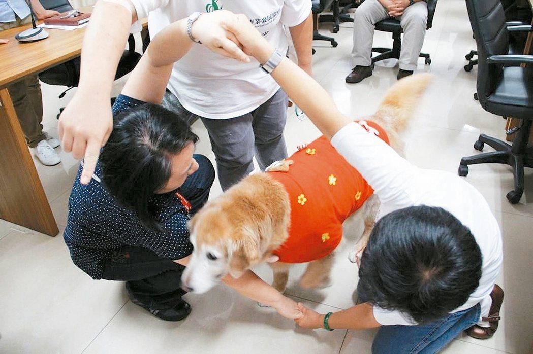 治療犬「勾等」和工作人員示範社交互動。 圖/台灣動物輔助治療協會提供