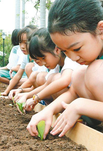 北市大附小學童在台灣博物館南門園區上自然課學種菜。 記者屠惠剛/攝影