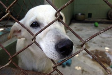 我們正在討論動物福利的議題?還是只是打群架而已?