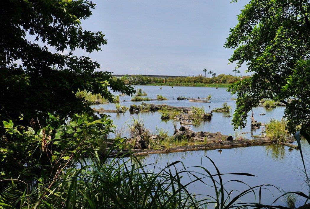 昔日的貯木池,今日已成為各式水鳥的棲息地。 記者陳威任/攝影