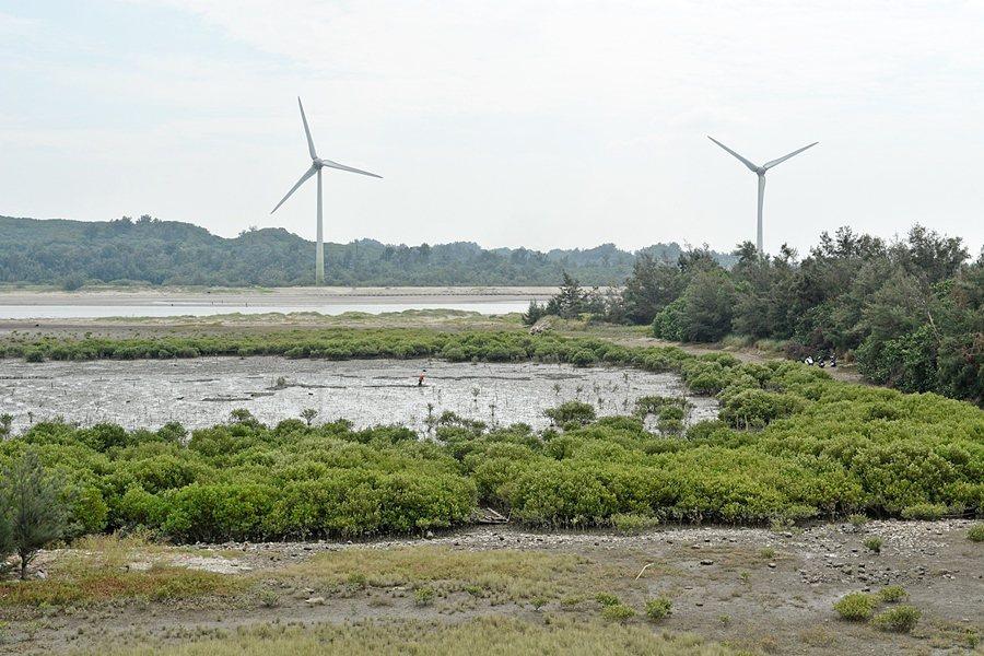 中港溪濕地紅樹林。