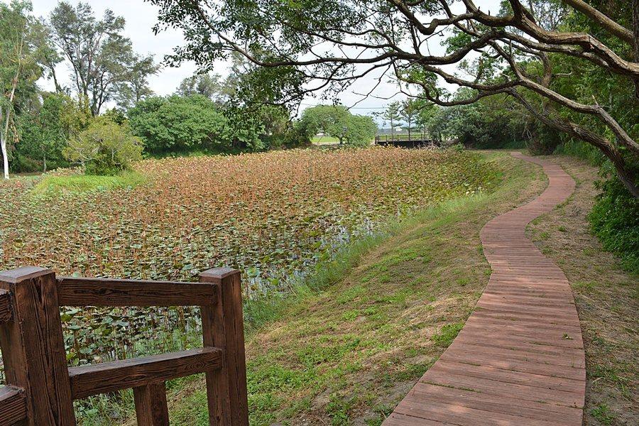 防風林入口處還有一個造景相當富含詩意的蓮花池。