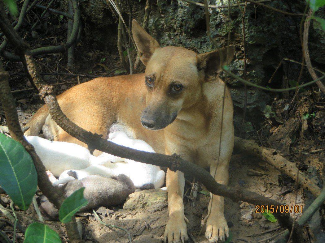 以目前較嚴謹的動物救援作業流程來說,哺乳中的母狗與未開眼幼犬並不會被立即移除。 ...
