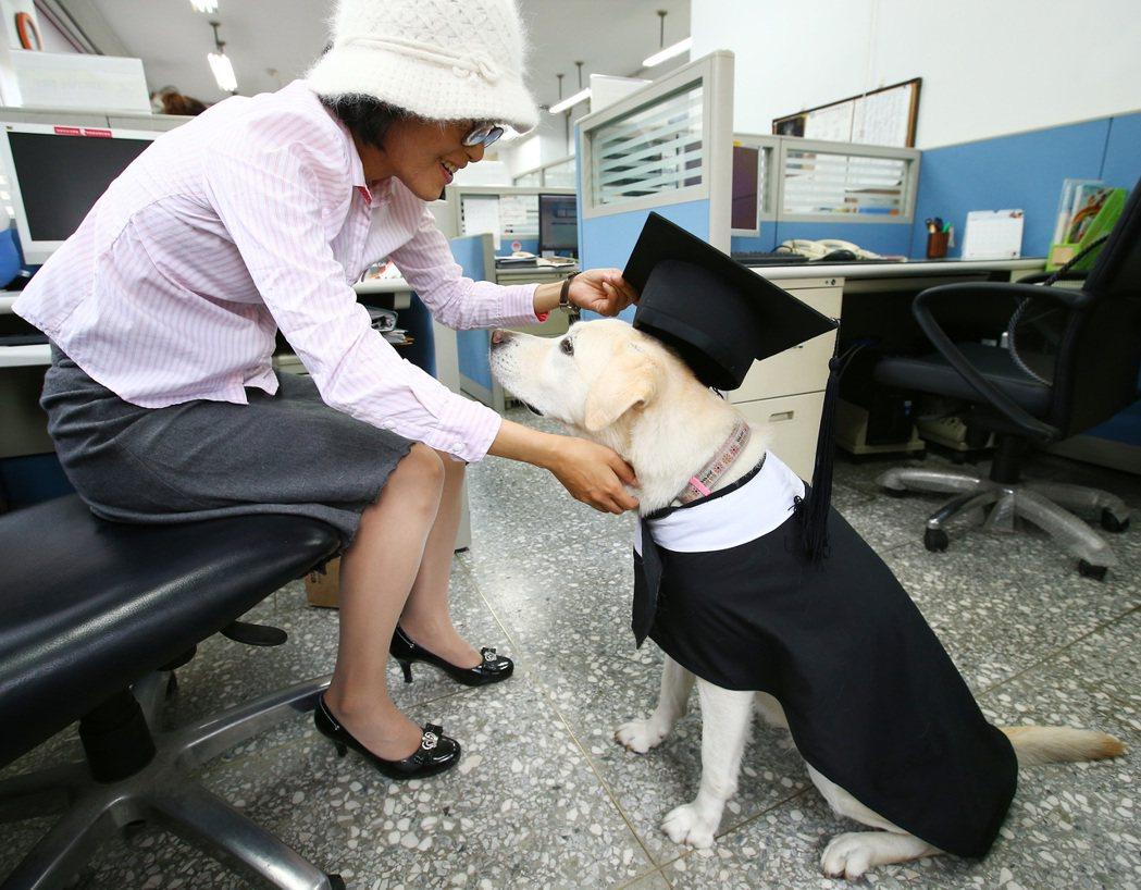 導盲犬塔希陪伴因意外失明的台科大職員張雅惠(左)七年,這隻人見人愛的拉布拉多是台...