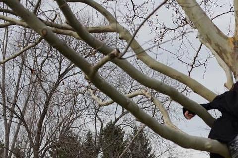 慶祝結婚紀念日的方式有很多,但一定想不到比王力宏更搞怪的,兩年前的11月27日他和李靚蕾註冊結婚,日前也在臉書上公開他和老婆慶祝結婚紀念日的方式,照片中兩人悠閒的坐在一棵大樹上,小倆口還牽著手,笑容...