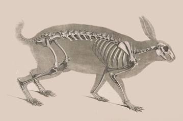 當解剖教學碰上動物福利與民粹爆料時,你選擇跟著飆罵或是理解?