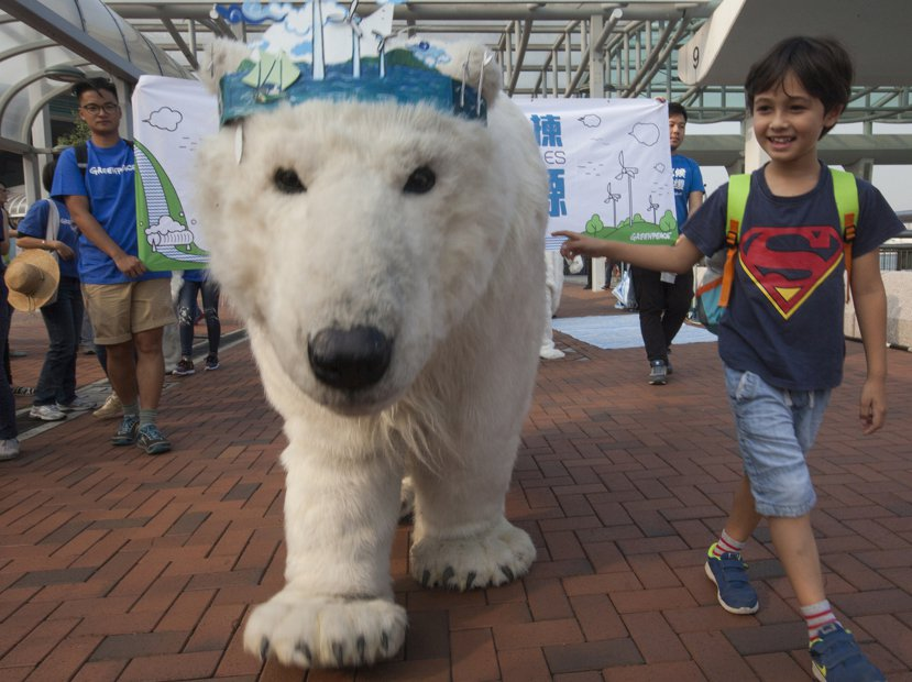 為響應2015巴黎氣候變遷會議,香港兒童牽著一頭假北極熊上街。圖/歐新社