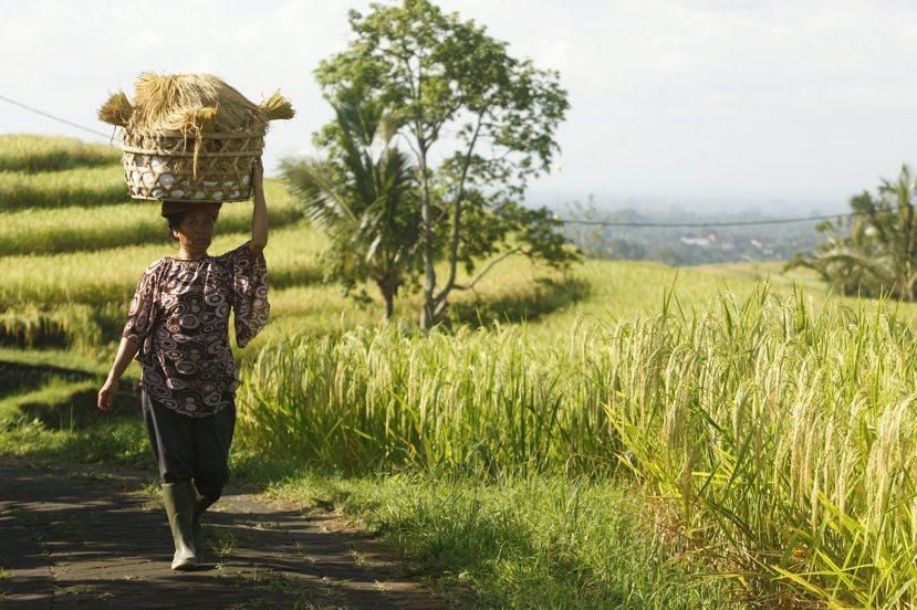 在行動裝之普及化後,鄉村裡的網路服務雖不及城市來的便利,卻被視為改變鄉村的重要進...