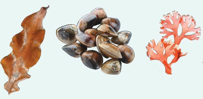 民眾可多攝取海帶、海苔、昆布、海菜或帶殼類海鮮,以攝取較豐富的碘。本報資料照片