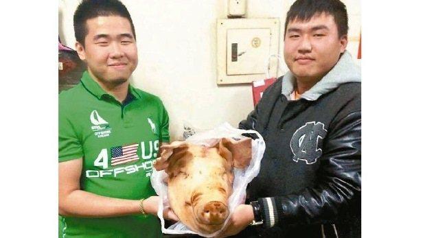 去年有人送朋友一顆豬頭,就上新聞啦~ 圖片來源/陳威成臉書