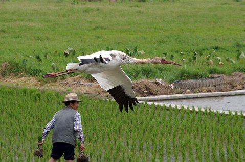 不管是去還是留,小白鶴事件帶給台灣社會的寶貴經驗與教訓
